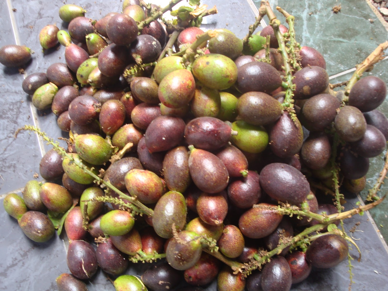 Image result for buah matoa