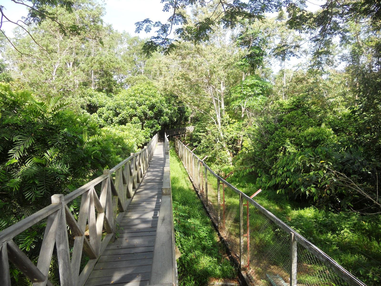 Hutan Lindung Sungai Wain