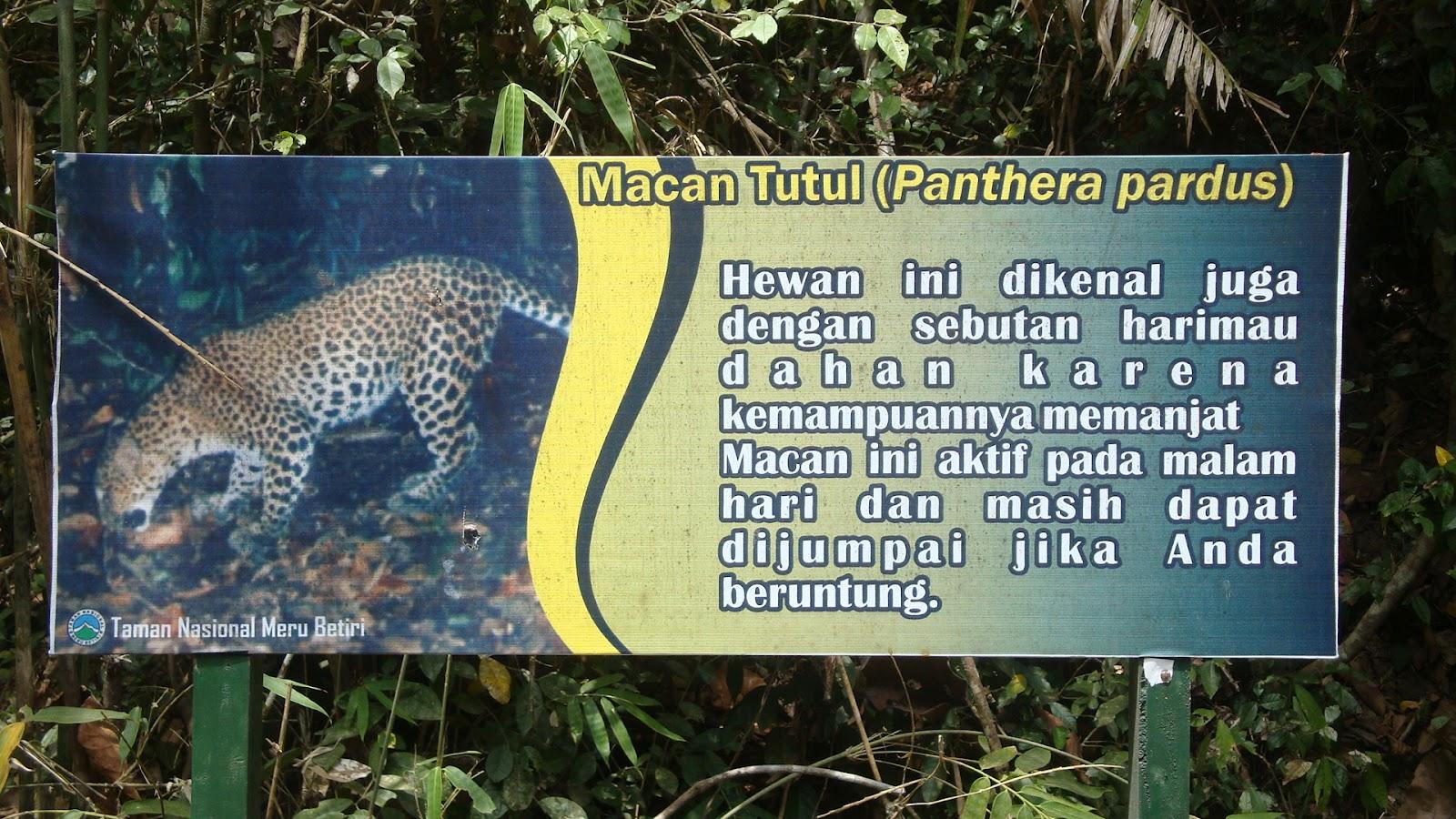Taman Nasional Meru Betiri 3 Jpeg