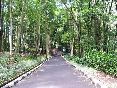 Image result for taman hutan raya sultan syarif kasim